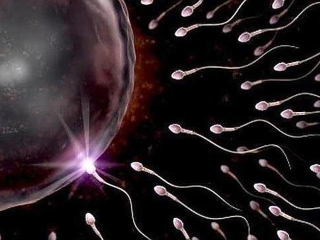Полезные свойства мужской спермы